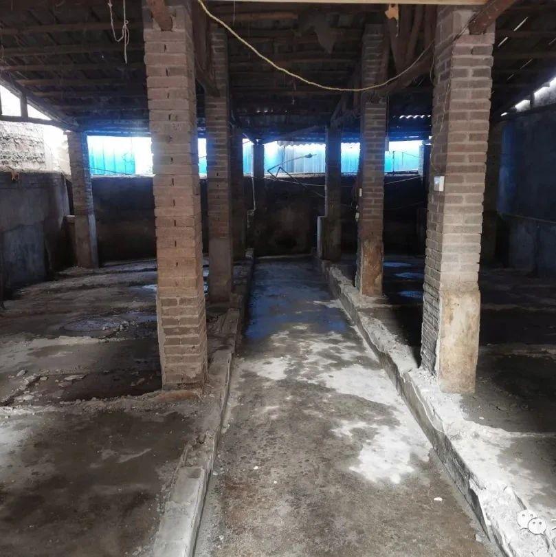 生猪养殖场污染环境?合浦县迅速整改