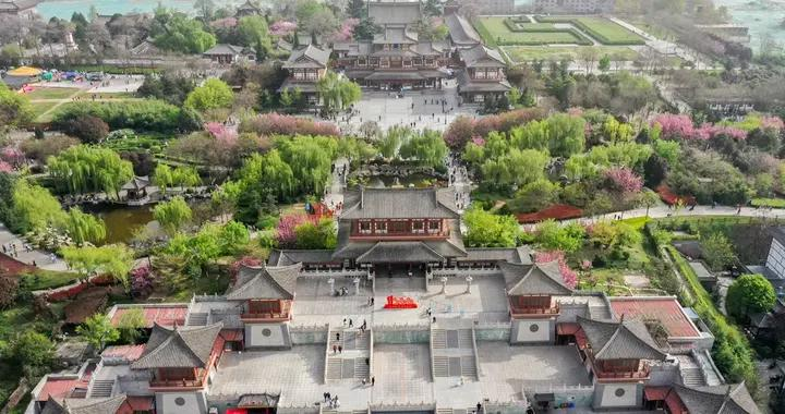 不只洛阳有牡丹,西安青龙寺的牡丹国色天香,还可以免费欣赏