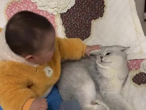 猫咪对小孩真的很有忍耐力