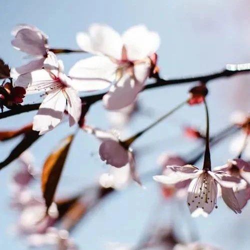 诗词丨与春天相遇,就是最美的重逢