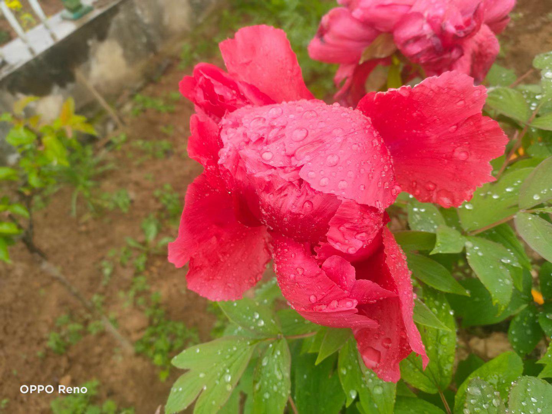骄阳烛照谷雨天,蛱蝶回翔廓外田……