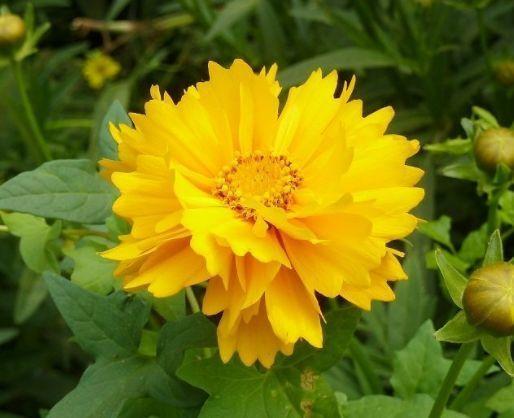 几款花卉便宜又好养,花期超长的,年年开花不断,颇受大家的喜爱