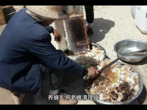 蜂群出现工产,再严重的工产都可以挽救,挽救工产蜂群的操作技巧