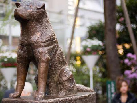 揭秘这些著名的动物雕像,背后所隐藏的情感故事