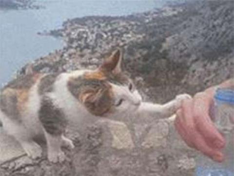路遇一只流浪猫,不停的挠网友的手,得知真相令人笑喷