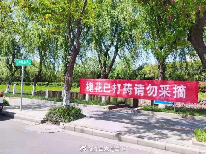 许昌 权威发布:关于禁止采摘槐花的公告!