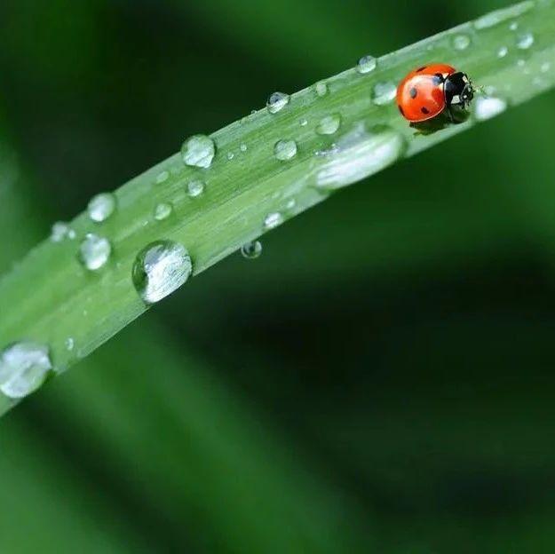 今日谷雨|走谷雨、品谷雨茶,这些习俗了解一下?