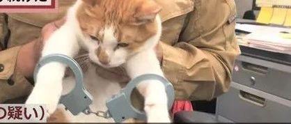 网友大呼:它是可爱的猫猫啊,你们怎么可以!!
