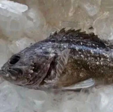 关注 | 放射性物质超标!日本禁售这种鱼