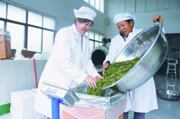 近日,记者走进位于江西坡镇联盟村的贵安茶业有限公司……