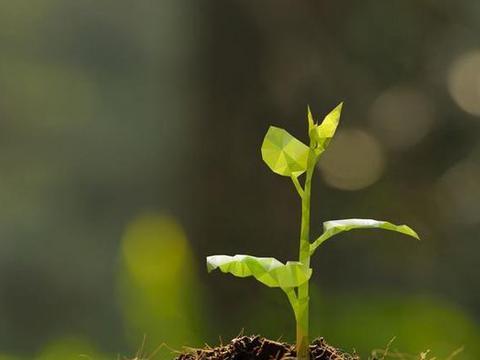 """泥土是地球的""""宝藏"""",地球上最早的泥土是什么时候形成的?"""