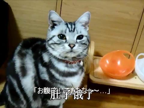 吃饭时间到了主人不给猫粮,猫咪直接把碗摔了,简单粗暴!