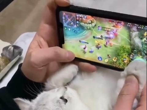 王者荣耀:你的队友是谁?猫猫队友上线,一顿操作看懵网友