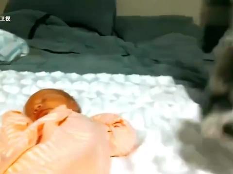 走进自然:第一次看到小宝宝,狗狗的反应逗得主人爆笑
