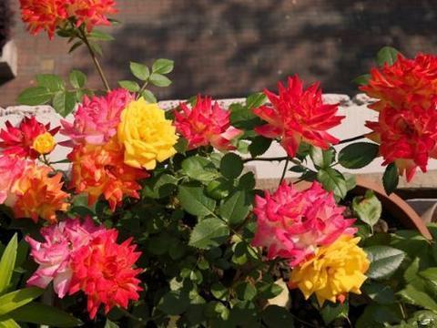 几款花卉便宜又好养,花期超长的,艳丽又迷人