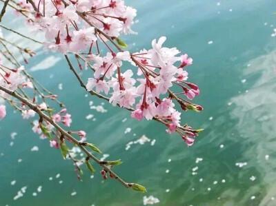 三首古诗,听细雨流光,看春花飞燕,守一份安暖,静待下一场花开