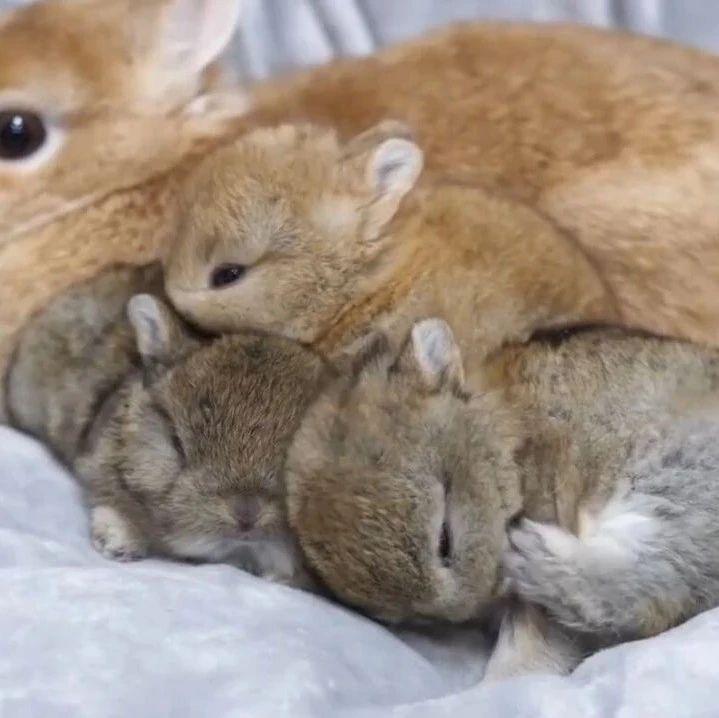 刚出生没多久的兔兔,毛绒绒一团团真的太可爱