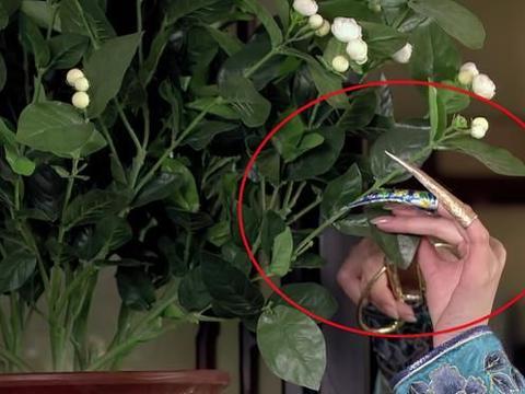 甄嬛传:安陵容侍寝后,甄嬛为何要剪下山茶花?崔槿汐:我知道