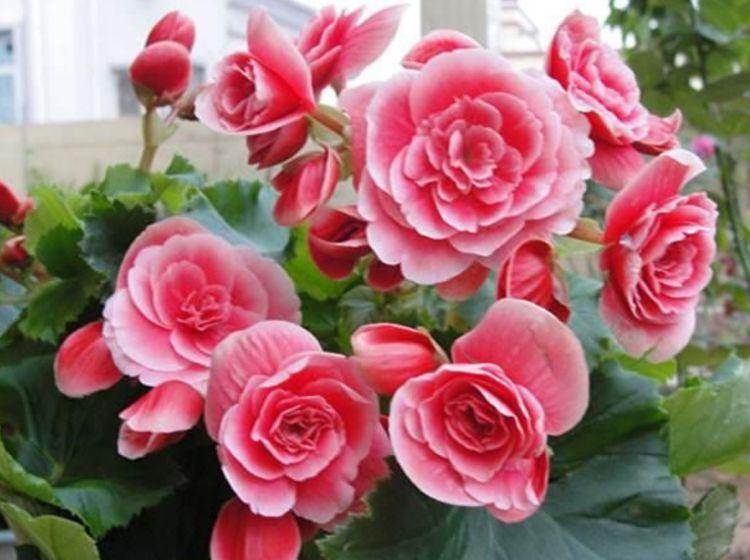 4种花颜值高,随便养就爆盆,净化空气清香四溢