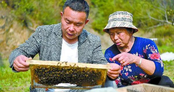 湘潭:生态养蜂助农增收