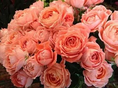 喜欢养花就养一种,四季都有花赏,花香阵阵美艳动人