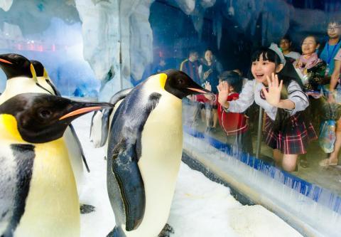 长隆攻克企鹅繁育难关 面向大众传递生态保护理念