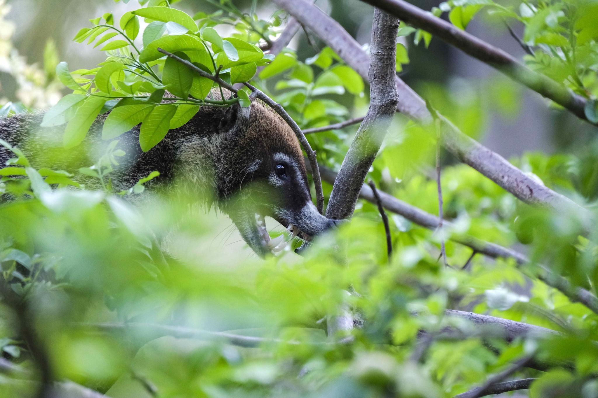 哥斯达黎加帕洛贝尔德国家公园