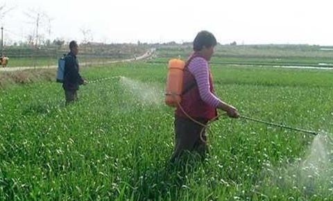 把尿素用作叶面喷肥,代替根部追肥,能节约肥料提高肥效吗?