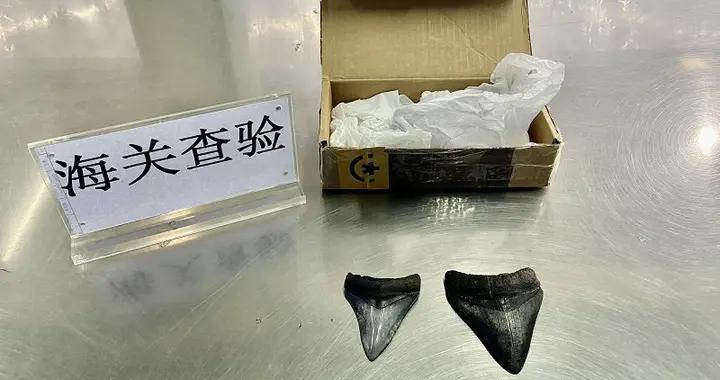 """重庆江北机场海关首次查获巨齿鲨牙齿化石,申报品名为""""玩具"""""""