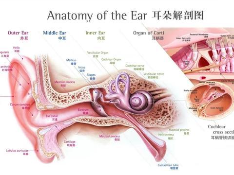 如何判断自己是否患上中耳炎?