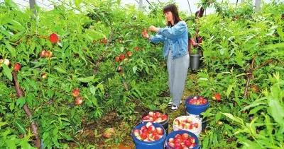 省委一号文件解读之三丨以农业产业化助力乡村振兴