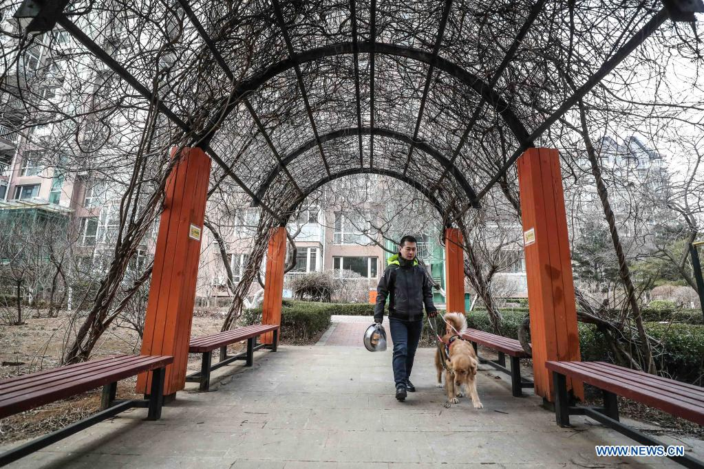 Visually impaired man Wen Shipeng walks with his guide dog in Dalian, northeast China's Liaoning Province, Jan. 13, 2020. The Dalian branch of the China Guide Dog Training Center, which was founded in May 2006, is a non-profit training institution of guide dogs in China. It has provided 239 free guide dogs to visually impaired people around the country. Guide dogs in the center are strictly selected from Labrador and Golden retrievers. Usually 45 days after birth, those puppies are sent to live with volunteer families, getting familiar with human life and learning simple orders. When the puppies grow up to about one year old, they are sent back to the center for professional training for one to one and a half year. Customized courses which are specially set according to the life scenes of visually impaired people, include going up and down stairs, avoiding obstacles and crossing streets. They also take a series of