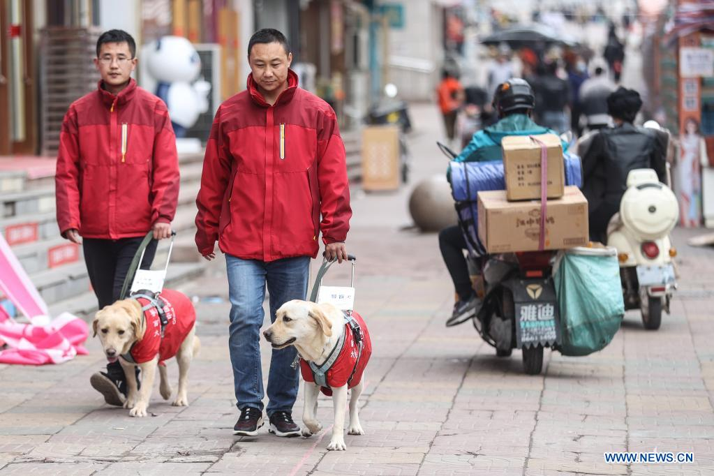 Trainers Fu Mingyan (R) and Jiang Boya train guide dogs on a street in Dalian, northeast China's Liaoning Province, April 23, 2021. The Dalian branch of the China Guide Dog Training Center, which was founded in May 2006, is a non-profit training institution of guide dogs in China. It has provided 239 free guide dogs to visually impaired people around the country. Guide dogs in the center are strictly selected from Labrador and Golden retrievers. Usually 45 days after birth, those puppies are sent to live with volunteer families, getting familiar with human life and learning simple orders. When the puppies grow up to about one year old, they are sent back to the center for professional training for one to one and a half year. Customized courses which are specially set according to the life scenes of visually impaired people, include going up and down stairs, avoiding obstacles and crossing streets. They also take a series of