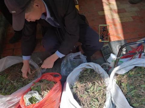 大爷市场卖山货,才30元1斤,和鸭肉是绝配,汤汁清甜清肺止咳!