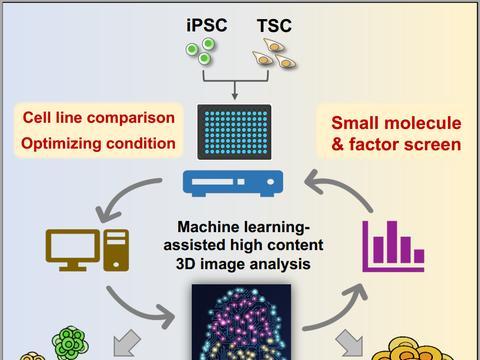 清华大学医学院合作开发基于机器学习的高通量图像分析策略