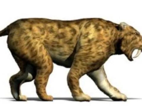 10000年前灭绝的大型猫科动物——剑齿虎