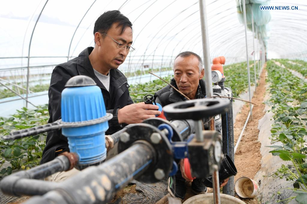 Zhang Shuhao (L) learns about the operational condition of a strawberry greenhouse from a villager in Mudan Township, Tianshui City of northwest China's Gansu Province, on April 27, 2021. Zhang Shuhao, 42, quit his well-paid job three years ago to start an agriculture company with a few partners sharing the same vision at a mountainous village in Mudan Township, Tianshui City. In three years, Xinghuarong, Zhang's company, contracted 6,200 mu (about 413 hectares) of idle arable lands, where terraced fields, greenhouses, and a reservoir have been built to grow diverse produces ranging from traditional Chinese medicine materials to juicy fruits. Apart from encouraging villagers to raise fowls, Zhang also offered job opportunities to more than 700 residents in five neighboring villages. Once commonly adopted extensive farming has been replaced by intensive and mechanized one. (Xinhua/Du Zheyu)