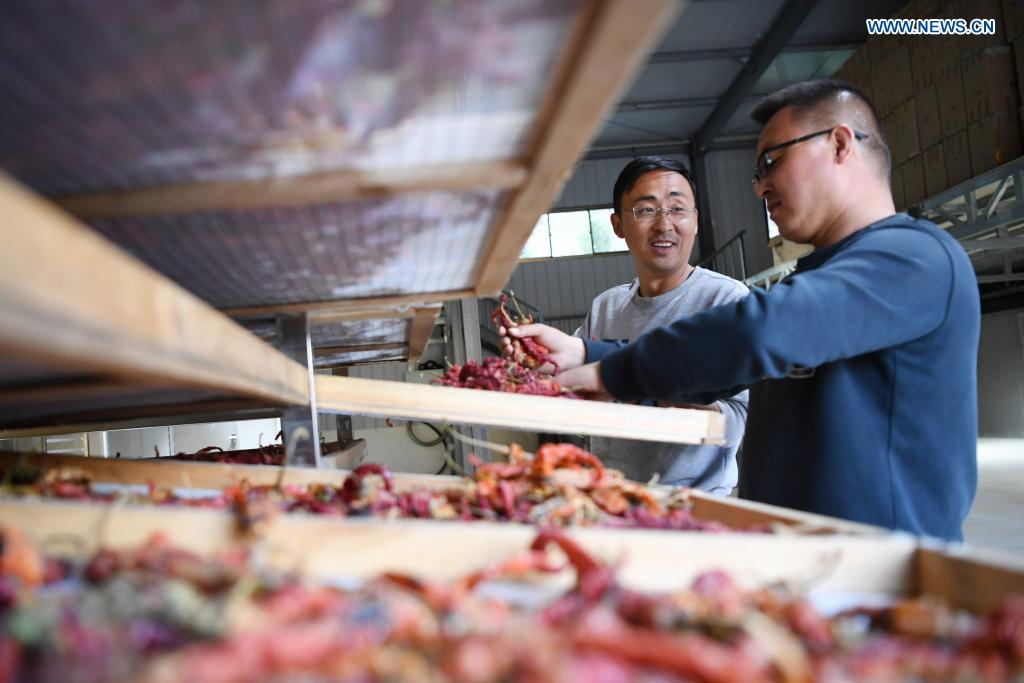 Zhang Shuhao (L) works with his colleague in a warehouse in Mudan Township, Tianshui City of northwest China's Gansu Province, on April 28, 2021. Zhang Shuhao, 42, quit his well-paid job three years ago to start an agriculture company with a few partners sharing the same vision at a mountainous village in Mudan Township, Tianshui City. In three years, Xinghuarong, Zhang's company, contracted 6,200 mu (about 413 hectares) of idle arable lands, where terraced fields, greenhouses, and a reservoir have been built to grow diverse produces ranging from traditional Chinese medicine materials to juicy fruits. Apart from encouraging villagers to raise fowls, Zhang also offered job opportunities to more than 700 residents in five neighboring villages. Once commonly adopted extensive farming has been replaced by intensive and mechanized one. (Xinhua/Chen Bin)