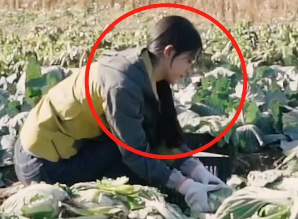 天悦平台赵丽颖离开冯绍峰后上节目,种菜抓拍图流出,33岁反而尽显少女感