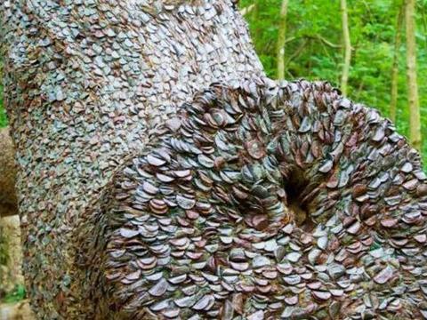 男子野外探险,发现树干像盔甲,走进一看镶嵌满了钱币