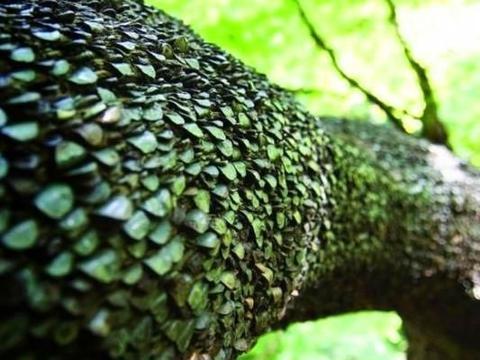 男子森林发现生钱树,树皮上长满了硬币,真相让他感慨万分