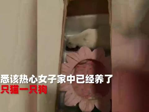 女子喂养怀孕流浪猫,偶然看见家养猫咪的幸福,那一望太心酸了
