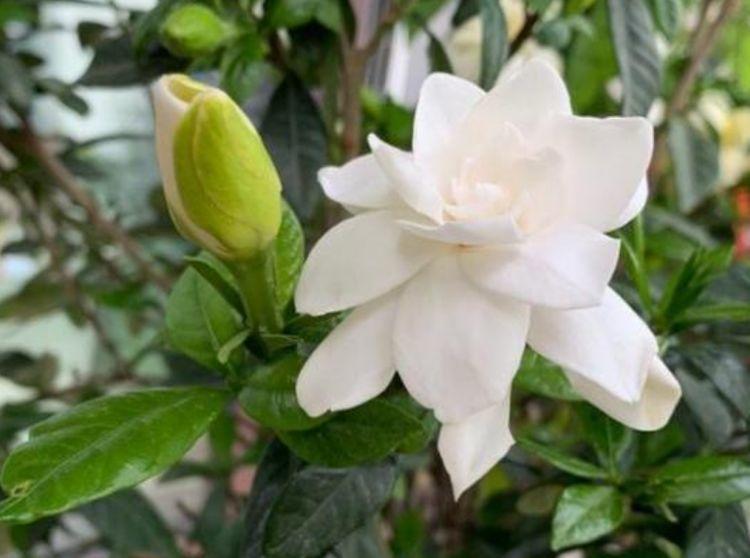 几种花卉市场最畅销的花,清新脱俗,对待新手很友好