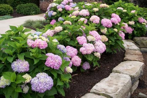 家里有个小院子,4种花安排起来,皮实好养开出花海