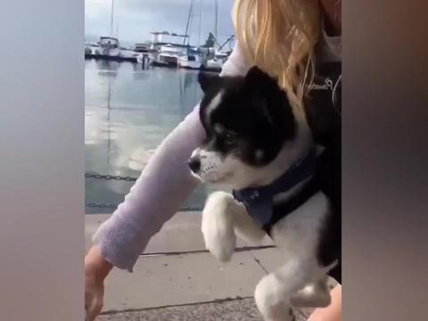 主人骑行把狗狗挂在胸前,狗的反应笑喷了