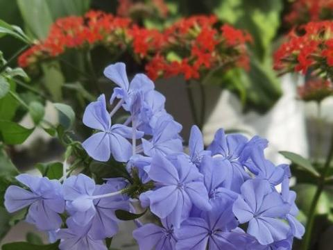 环境影响生长,家庭养花,养不好没关系,琢磨经验是硬道理
