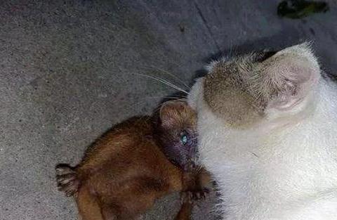 小伙看见猫咪抓了一只大老鼠,靠近一看后,吓得赶紧放生了
