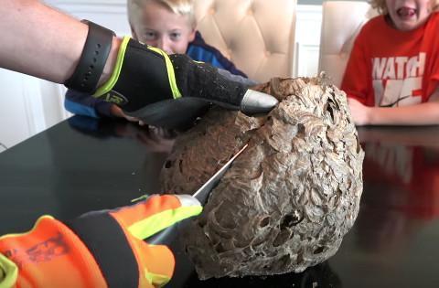 男子在孩子面前用水果刀切大黄蜂蜂巢,结果是这样的画面