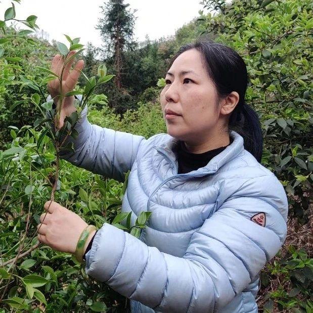 《生态江西》刘蕾:赣南油茶科技推广的有心人