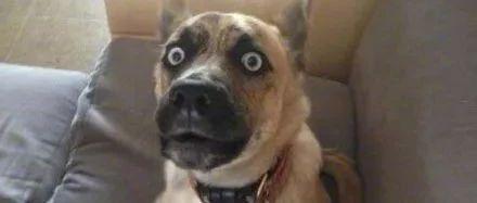 带狗去做绝育,却被宠物医院里的锦旗笑出猪叫声...